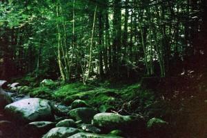 green Grant Brook