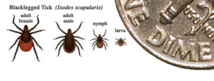 Lyme Disease: Ticks and Targets, Myths and Realities @ Lyme School Cafeteria | Lyme | New Hampshire | United States